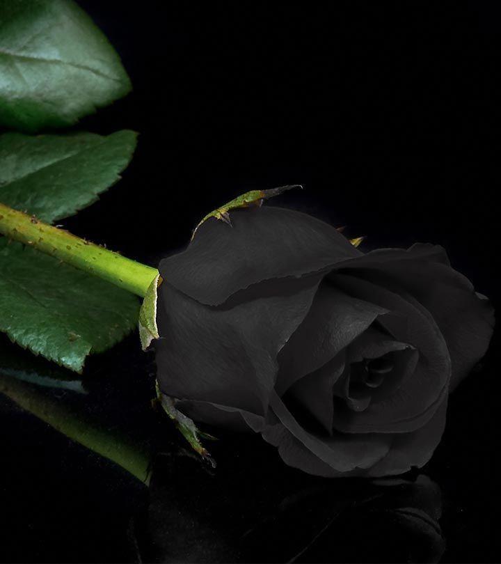 Картинки с черным цветком