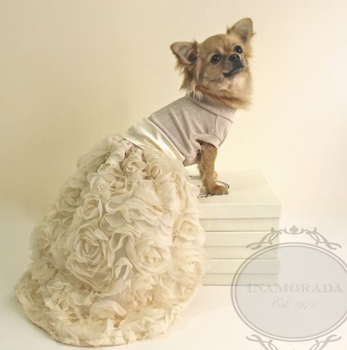 1000  ideas about Designer Dog Clothes on Pinterest  Girl dog ...