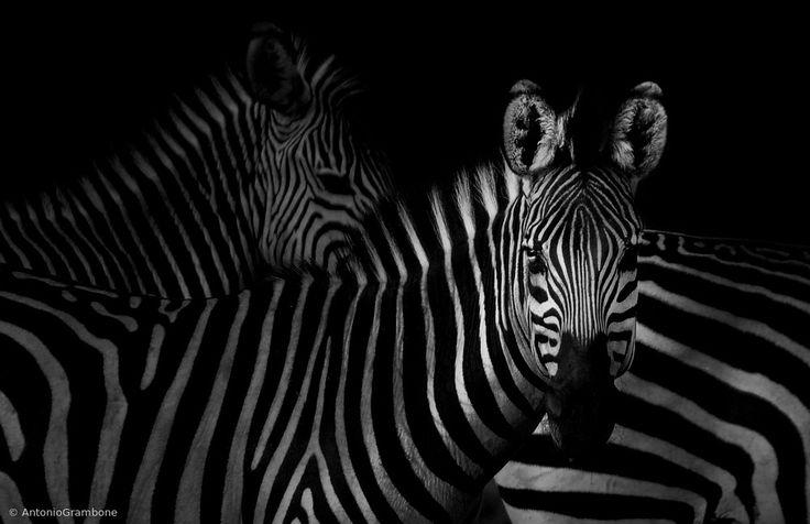 Ingen titel av Antonio Grambone - Fotokonst från Gallerix. Besök oss på https://www.gallerix.se