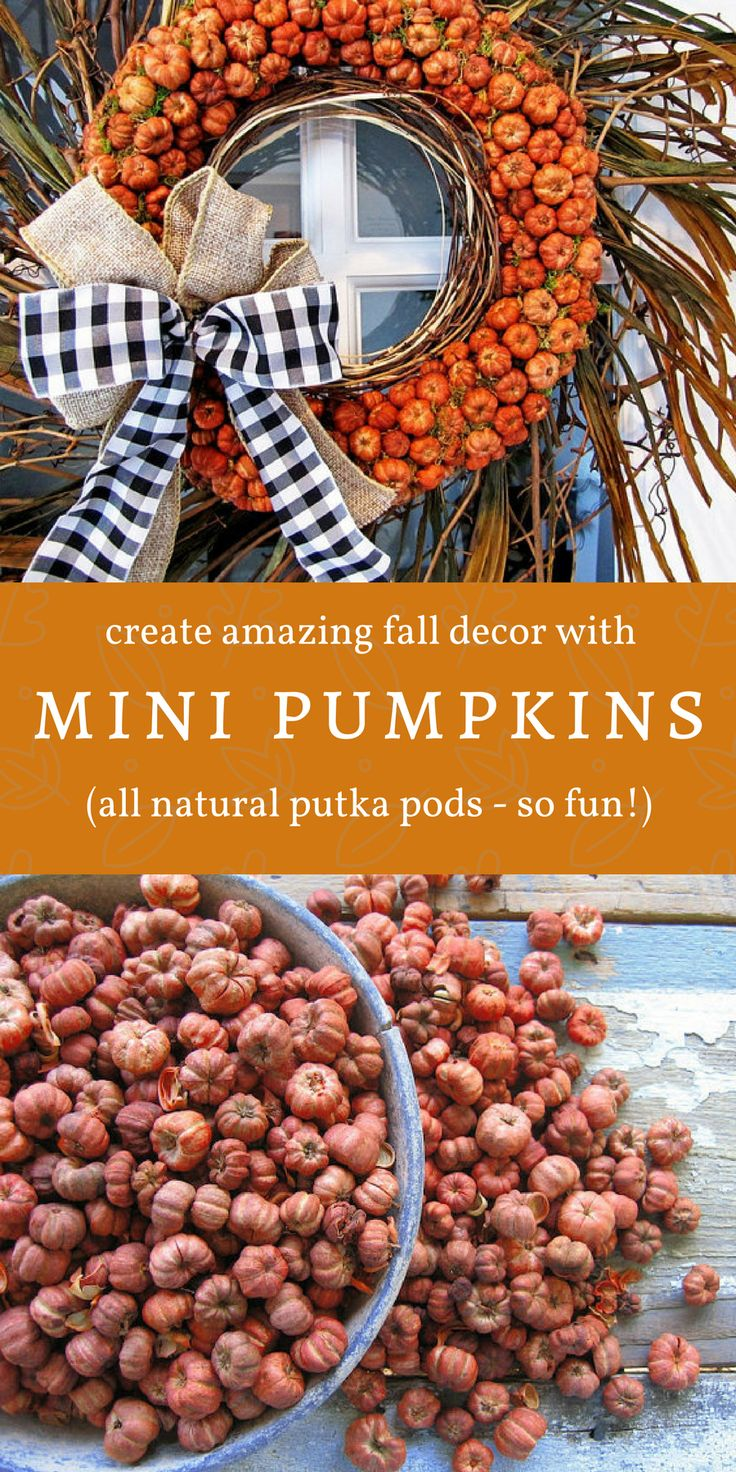 Fun miniature pumpkins!  They're actually putka pods, a natural little seed pod, and they look just like tiny pumpkins.  Use them to make a wreath like this one, put them in the back of a miniature truck bed, use them in a fairy garden, or scatter them on