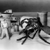 The Incredible Shrinking Man (1957) with the hero mauled by a cat and facing off with a preditory spider as he slowly disappears into nothing.