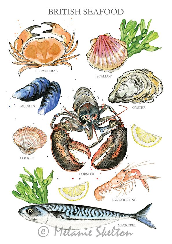 foto de British Seafood Illustrated A4 Giclée Print Wall Art