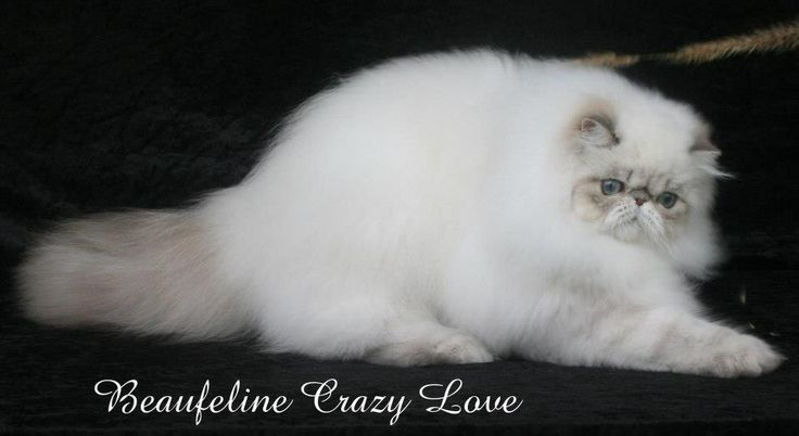 Beaufeline Crazy Love
