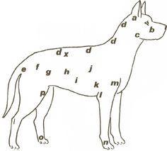 Massage d'entretien pour son chienVoici un massage préconisé par le docteur Michael W. Fox, vétérinaire et auteur de The Healing Touch for Dogs, que vous pouvez pratiquer au quotidien pour stimuler de nombreux points d'acupuncture.Cette quarantaine de points identifiés sur ...