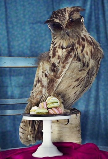 Early owl gets a macaron!