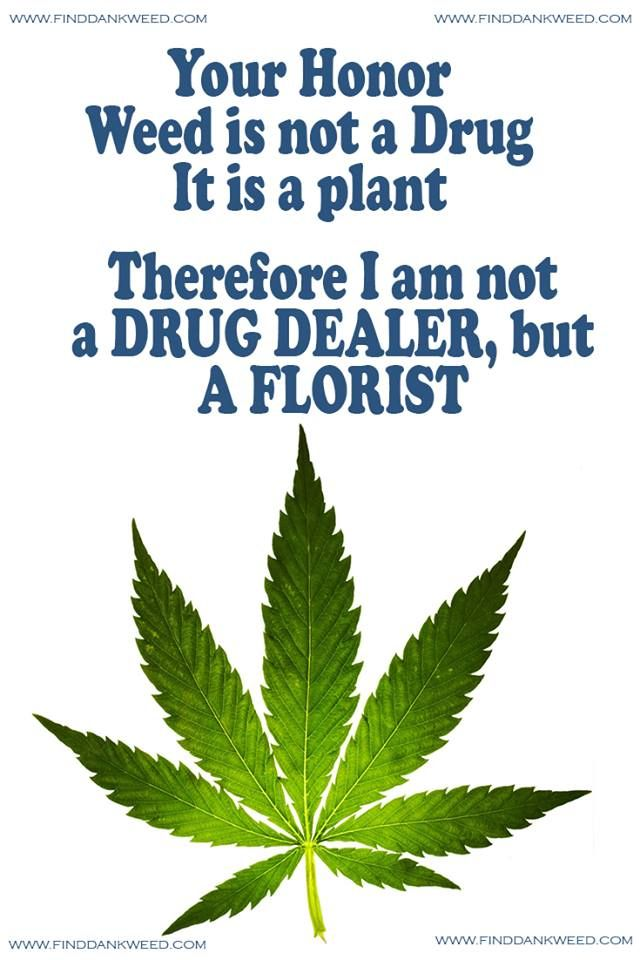 Looking for a marijuana dispensary & Weed Store near me? The finddankweed has the best marijuana in california, the highest rated retail weed stores. http://finddankweed1.blogspot.com/2017/06/cannabis-life-saver-weed-store.html