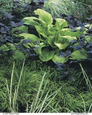69 best Wetland Landscaping images on Pinterest | Backyard ... on Landscaping Ideas For Wet Backyard id=91377