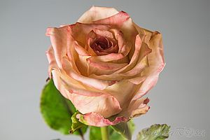Магазин мастера Bella Rosa Школа лепки цветов