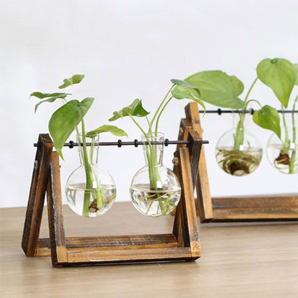 Luxury Cars Hydroponics Glass Vase With Wood Stand From Apollo