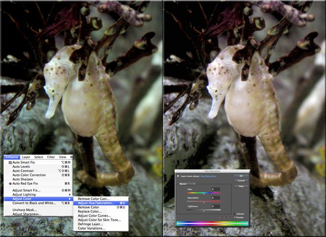 5 Fast Photo Fixes in Photoshop Elements: Fast Photo Fixes #4 - Color Hue/Saturation