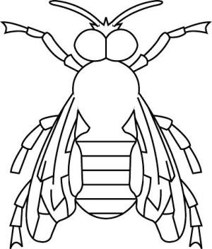 Insects coloring page 51