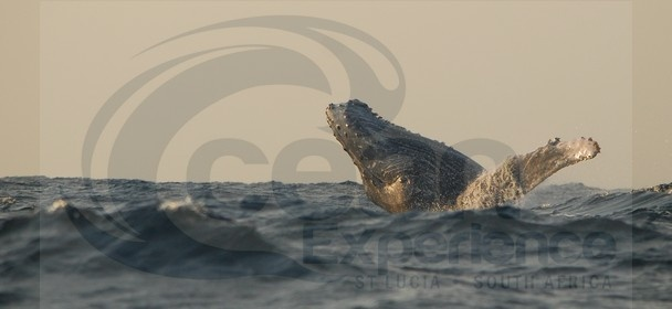 Ocean Expereince Whale Watching St Lucia iSimangaliso Wetland Park