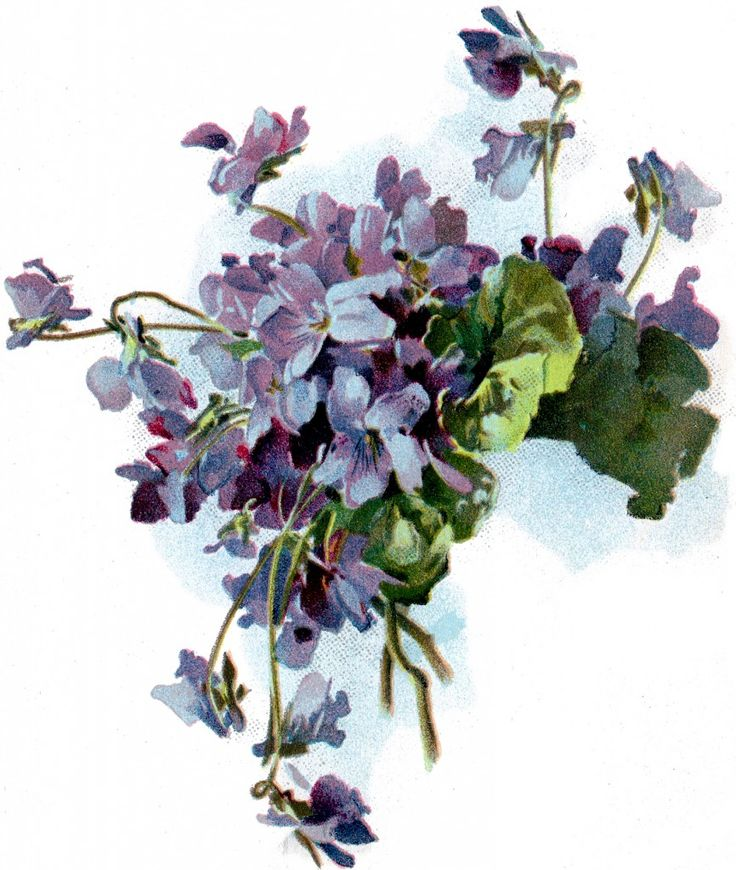 Free Vintage Violets Image! - The Graphics Fairy