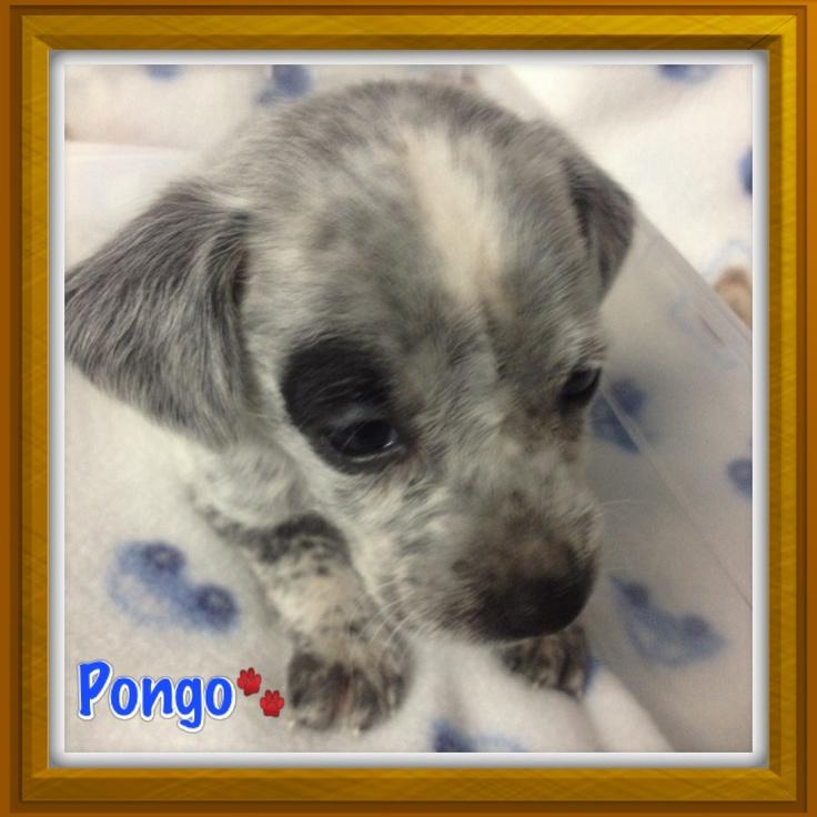 #Pongo my rescue and adopted Dog  #Adopt #Adopta #RescueDog