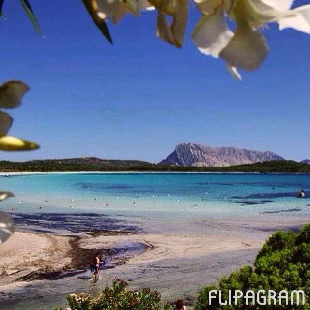 ▶ Riproduci un video #flipagram #sardegna #spiagge #sardinia #beaches #italy - http://flipagram.com/f/6f0fxlzA07