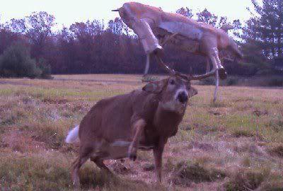 Poor Guy...Whitetail Buck with Deer Target stuck to antlers