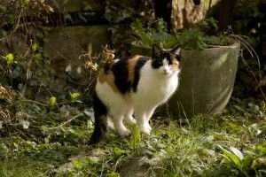 "Natural Cat Repellants for your garden | gardeningknowhow.com   (may also deter rabbits and dogs)       Short-term:  Cut-up lemons, oranges or other citrus fruit and place them in your garden      Long-term:  Plant ""Scaredy Cat""  (coleus canina), lavender, rosemary or pennyroyal."