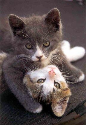 Bonitos gatitos. Las patitas cruzadas de la gatita, que bella, me encanto =). Imagen de amor, caracter, ternura y diversion. Buen dia.