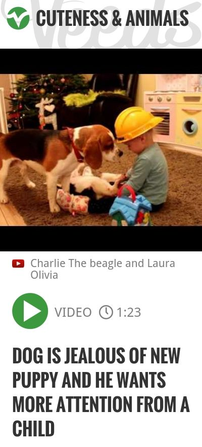 Dog is jealous of new puppy and he wants more attention from a child   http://veeds.com/i/2Rn0pU5rkz8fJlI4/cuteness/