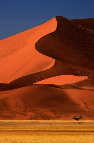 Big Dune Lone Tree, Sossusvlei, Namibia. Africa. I want to go there once in my life.