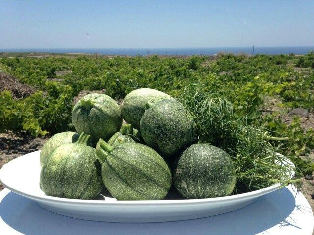 Today we took a walk in the countryside of #Santorini to choose the best #localproducts, one by one. Today's menu includes these wonderful #Santorinian #zucchini! #Catering #events
