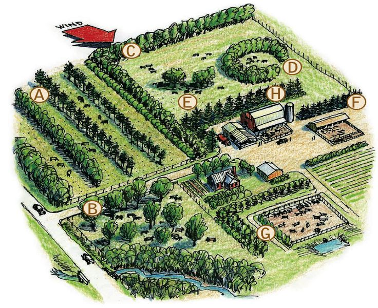 The 25+ best Farm layout ideas on Pinterest | Barn layout ...