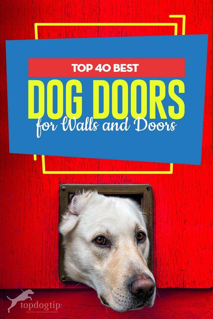 The 40 Best Dog Doors For Walls And Doors Best Dog Door Best