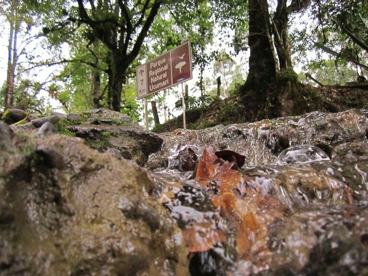 Parque nacional ucumari, florida, perrira, colombia