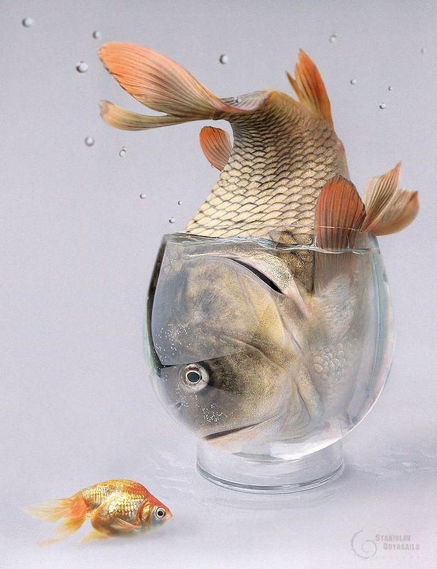Картинки рыба прикольная, открытка