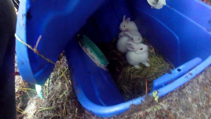 DIY Rabbit Burrow for Rabbit colony