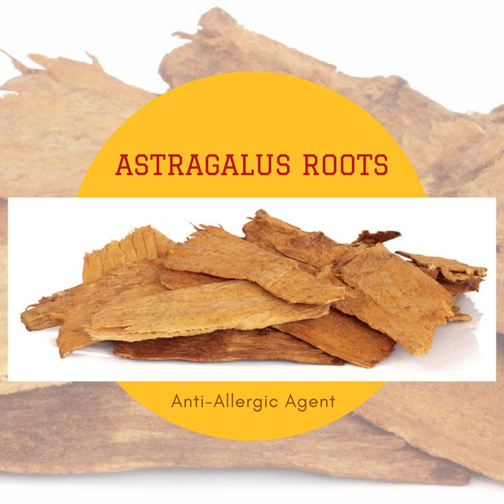 Astragalus roots are well known for fighting allergy. A tincture produced from the dried roots of this herb, when taken twice a day, is known to provide relief from allergic rhinitis as well as asthma. It is also recommended as a natural treatment for hay fever. Furthermore, it helps ward off allergy-induced cold, given its antiseptic and antimicrobial properties.  #USimplySeason #spices #AstragalusRoots  Source: Style Craze…