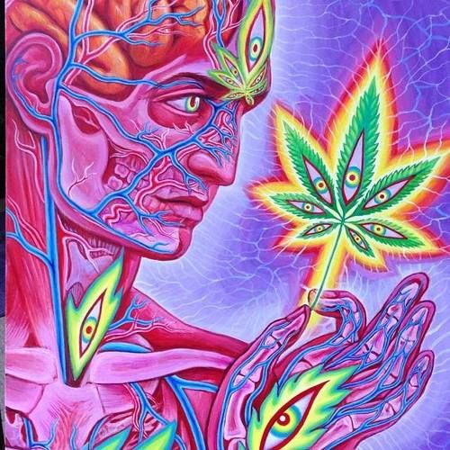 Cannabis Sutra, by Alex Grey. / Anatomical <3