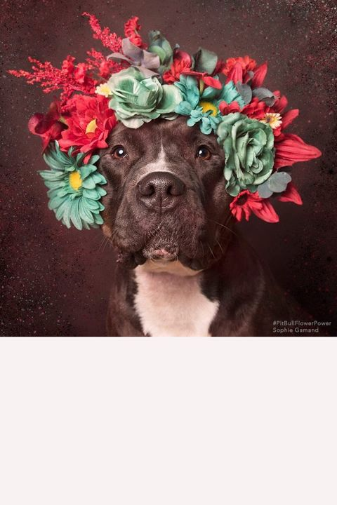 Puppies + Coachella = Pitbulls in Flower Crowns, your new favorite Tumblr. See more photos and learn more about its story.