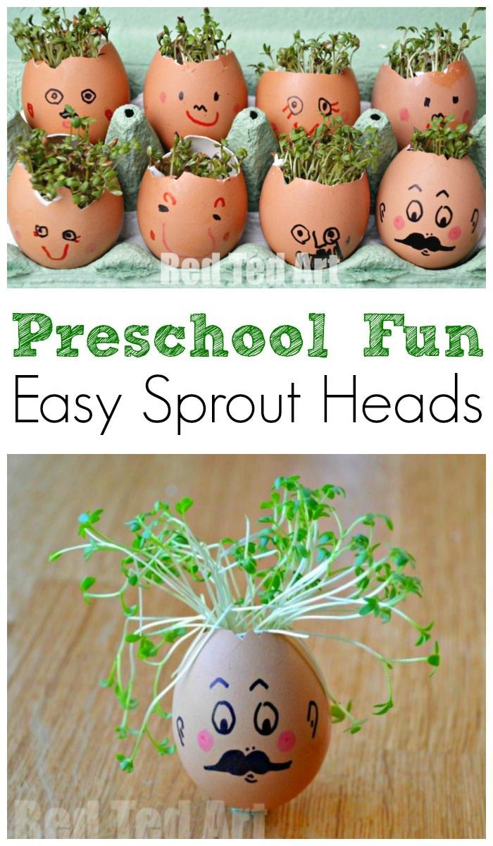 Easy Preschool Activity for Spring. Preschool STEAM activity. Cress heads how to. Sprout heads. #spring #preschool #steam