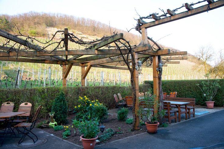 Berninger's vineyards
