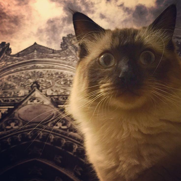 The Saint-Vitus Cat