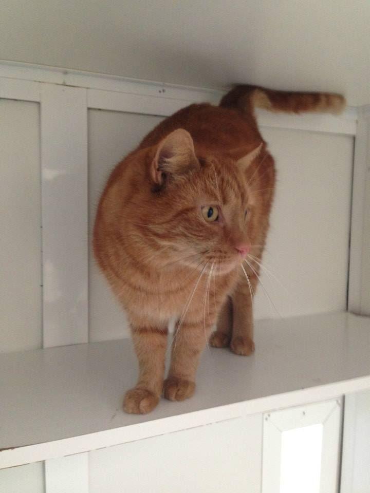 Ik zou graag deze kat van voren willen zien, hij lijkt op mijn gezochte kater, wie weet waar deze kater zich bevind?