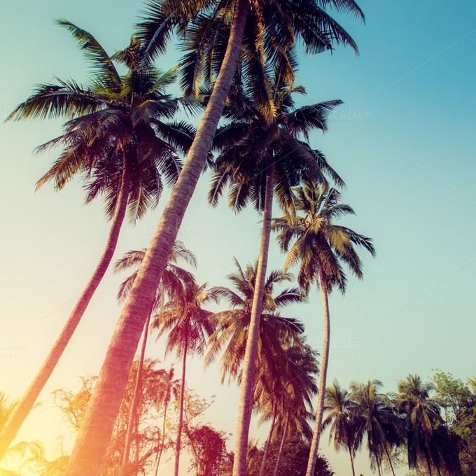 Coconut tree by Pushish Images on @creativemarket