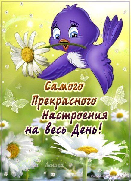 Доброе утро, день, вечер