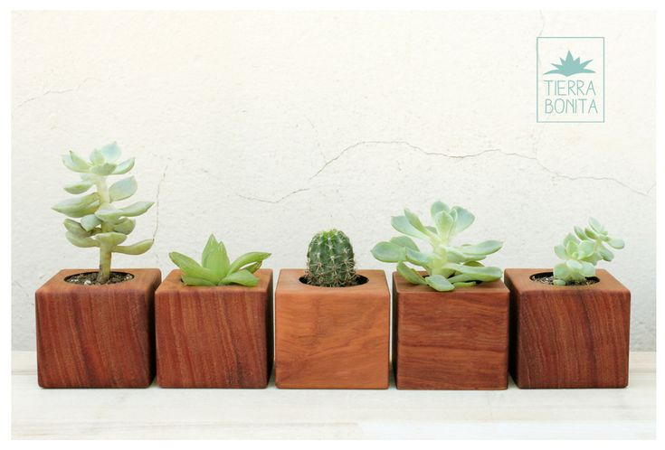 Cubos de madera maciza mini macetas para cactus y for Wooden cactus planter