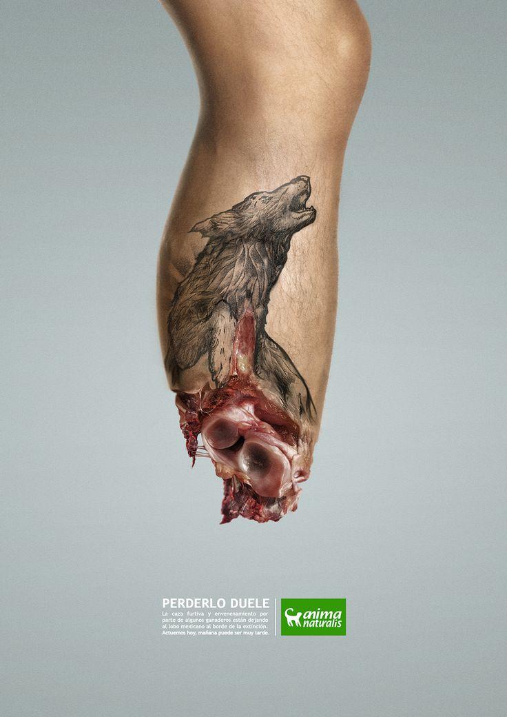 """AnimaNaturalis, organización no gubernamental y sin fines de lucro que trabaja por la defensa de los animales en Iberoamérica, , presenta la campaña """"Duele"""", que busca concientizar a la sociedad sobre las 2 mil 600 especies animales que están en riesgo d…"""