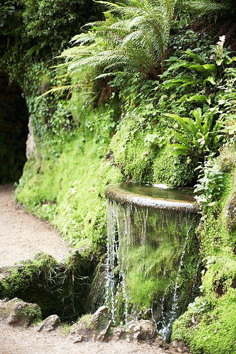 Explore the magical beauty of irelands gardens