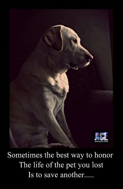 Best Dog Passed Away Ideas On Pinterest Lost Dog Quotes - 29 cats lost way life
