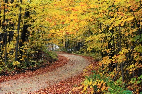 The Best Autumn Leaves and Fall Foliage Tours In America