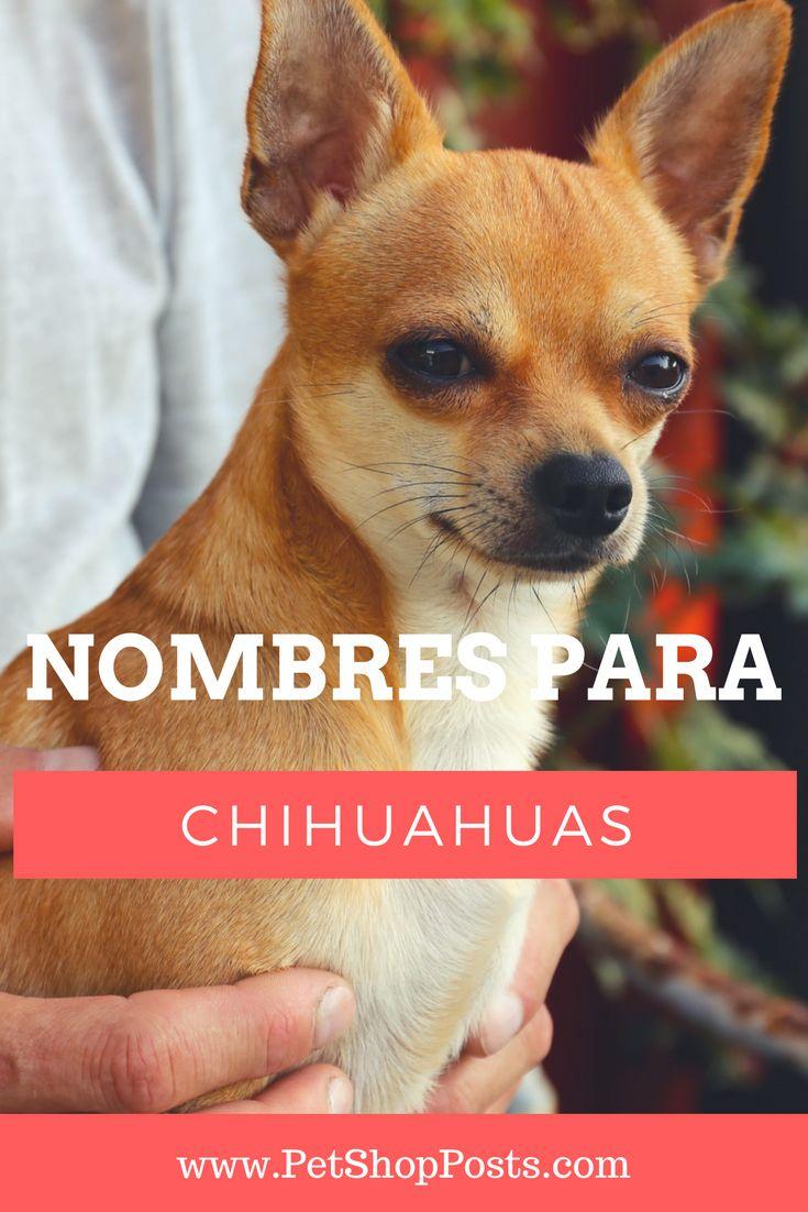 Ideas de nombres Para Chihuahuas, Nombres para Chihuahuas, Chihuahuas, Perros Chihuahuas.