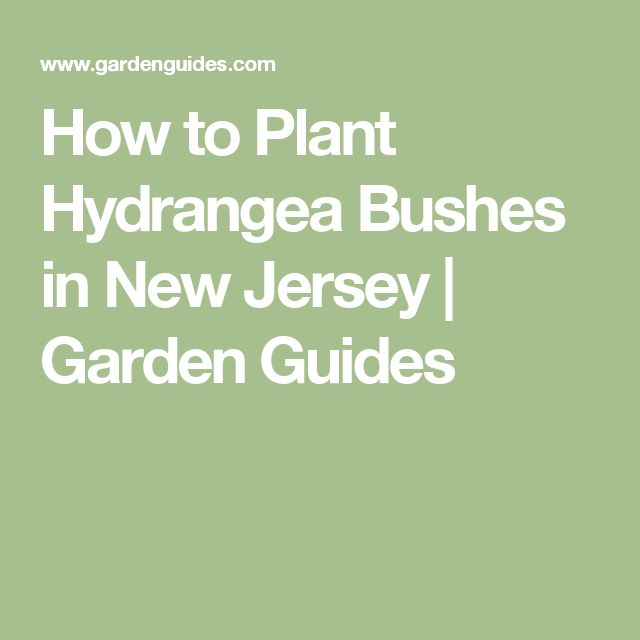 How to Plant Hydrangea Bushes in New Jersey |  Garden Guides