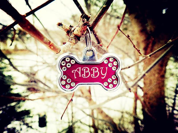Abby by Cattura - I think somebody found Abby's lost name tag :). Hope you will see it soon, Abby.