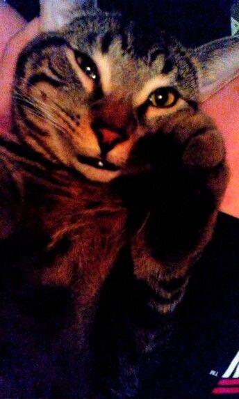 #cutekitten #handsome #cats #kitten #himom #smile