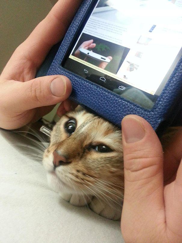 22 Чумовых Кота, Которые Плевать Хотели На Ваше Личное Пространство