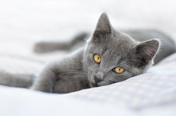Pielęgnacja i żywienie kota seniora:  http://kakadu.pl/Zdrowie-kotow/pielgnacja-i-ywienie-kota-seniora.html